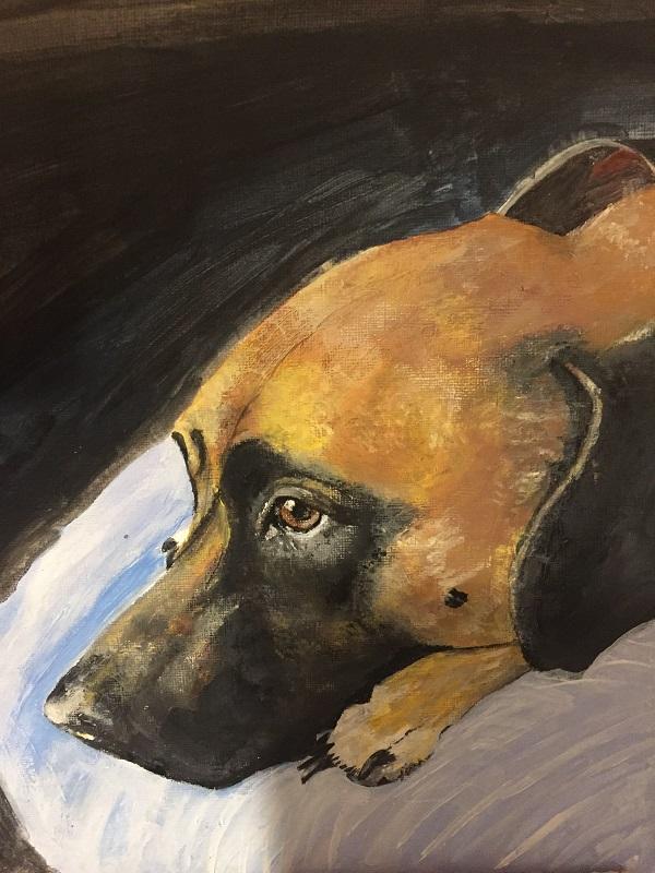 link to pet portrait gallery